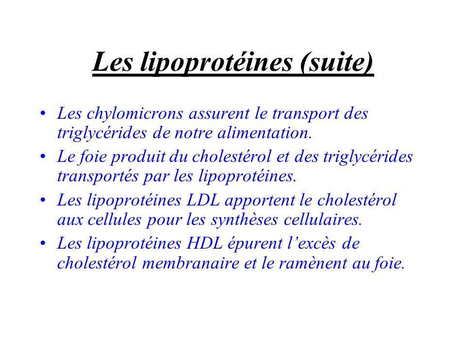 Les lipoprotéines (suite) Les chylomicrons assurent le transport des triglycérides de notre alimentation. Le foie produit du cholestérol et des trigly