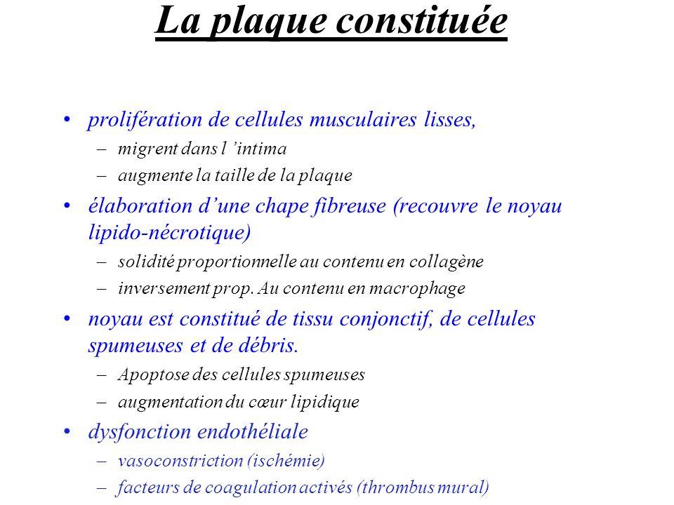 La plaque constituée prolifération de cellules musculaires lisses, –migrent dans l intima –augmente la taille de la plaque élaboration dune chape fibr