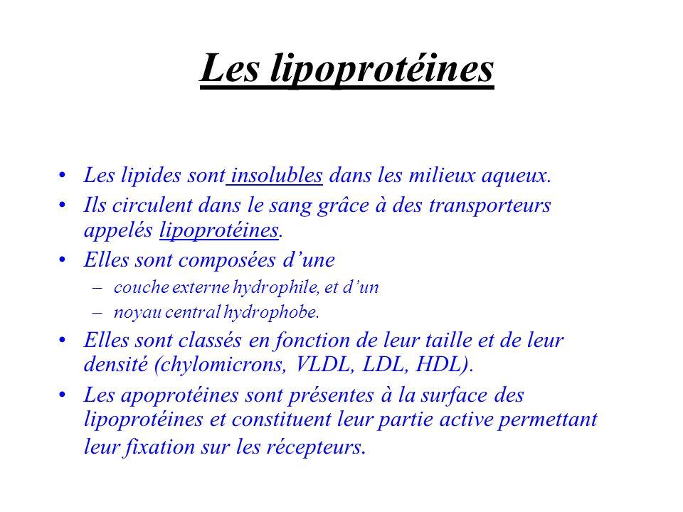 Les lipoprotéines Les lipides sont insolubles dans les milieux aqueux. Ils circulent dans le sang grâce à des transporteurs appelés lipoprotéines. Ell