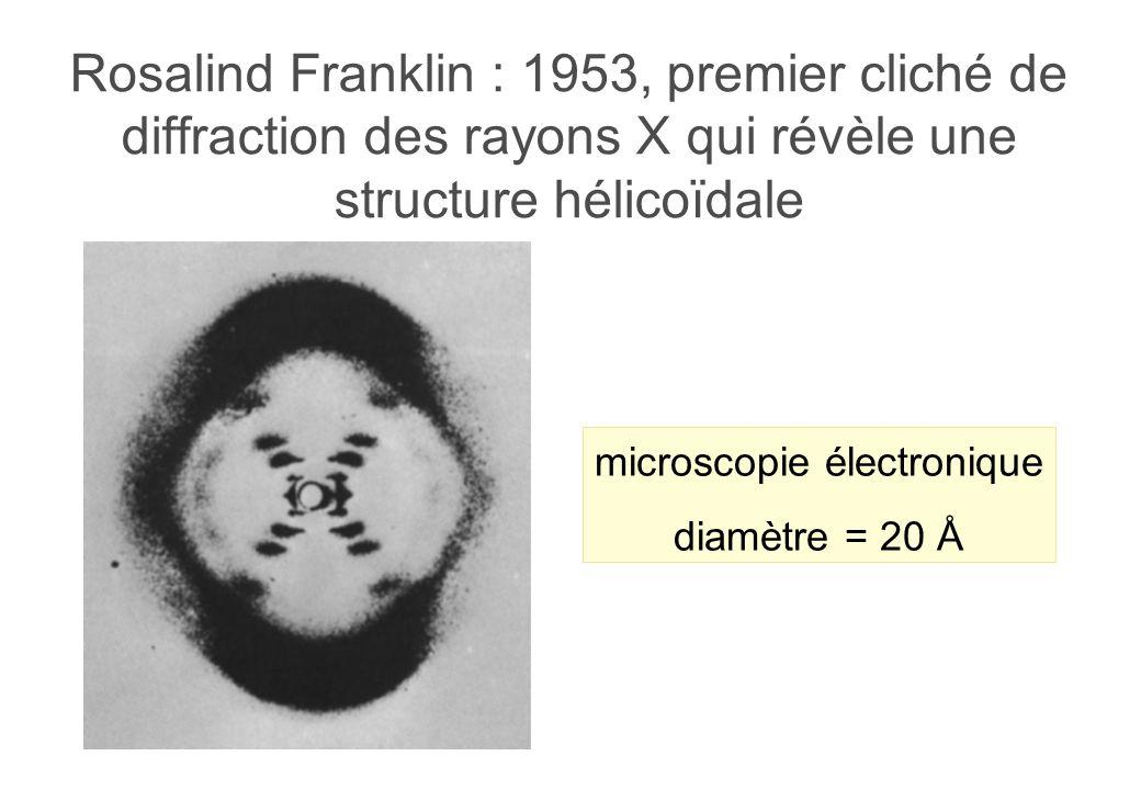 Rosalind Franklin : 1953, premier cliché de diffraction des rayons X qui révèle une structure hélicoïdale microscopie électronique diamètre = 20 Å