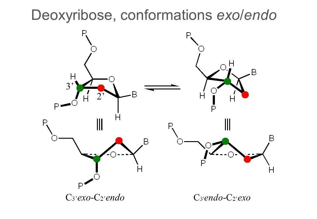 Deoxyribose, conformations exo/endo 3 2 C 3 exo-C 2 endo C 3 endo - C 2 exo
