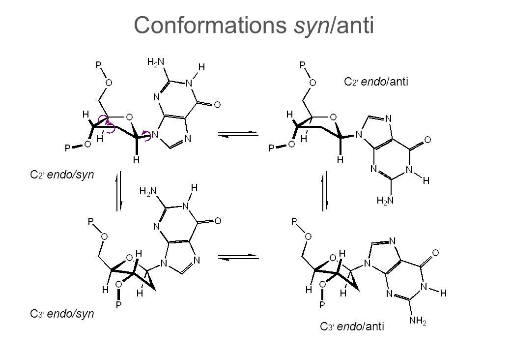 Conformations syn/anti C 2 endo/syn C 2 endo/anti C 3 endo/syn C 3 endo/anti
