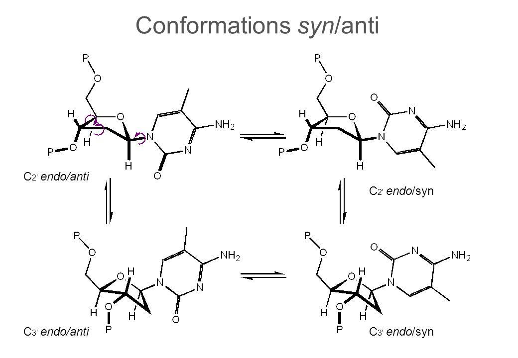 Conformations syn/anti C 2 endo/anti C 2 endo/syn C 3 endo/antiC 3 endo/syn
