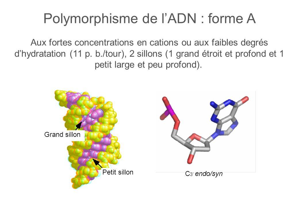 Aux fortes concentrations en cations ou aux faibles degrés dhydratation (11 p.