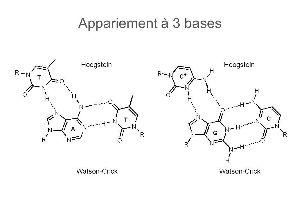 Appariement à 3 bases Watson-Crick Hoogstein