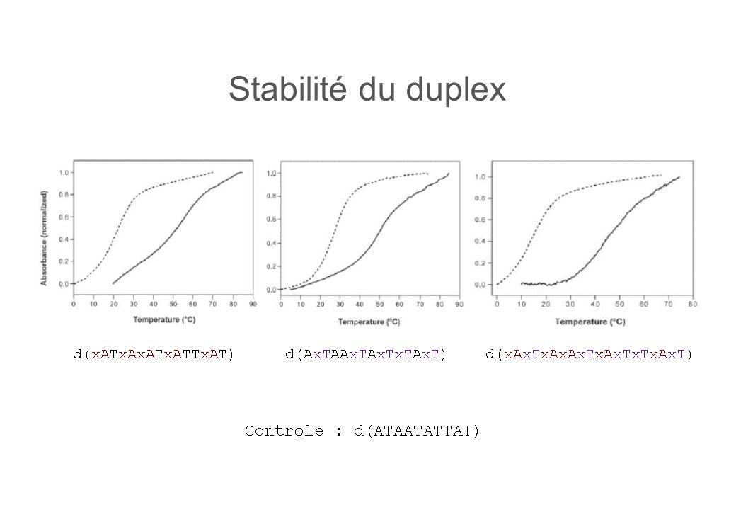 Stabilité du duplex