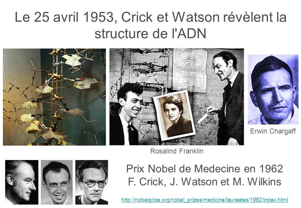Le 25 avril 1953, Crick et Watson révèlent la structure de l ADN Prix Nobel de Medecine en 1962 F.