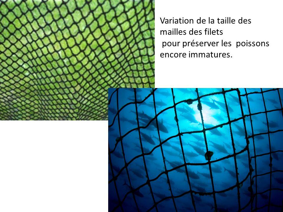 Variation de la taille des mailles des filets pour préserver les poissons encore immatures.