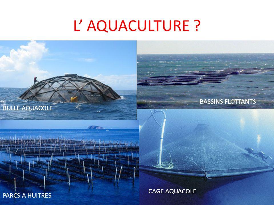 L AQUACULTURE ? CAGE AQUACOLE BULLE AQUACOLE BASSINS FLOTTANTS PARCS A HUITRES
