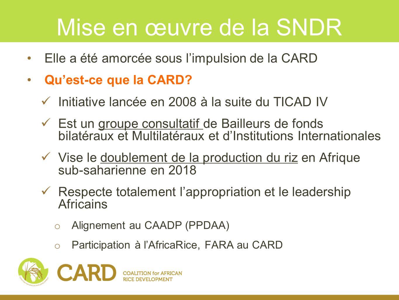 Objectifs du CARD Accroitre linvestissement pour le développement de la filière Riz, notamment à travers le cadre de financement existant Instaurer une meilleure coordination des interventions basée sur une vision partagée du développement rizicole Aligner la Stratégie Nationale de Développement Rizicole (SNDR) aux autres documents stratégiques (CAADP, DSRP,…)