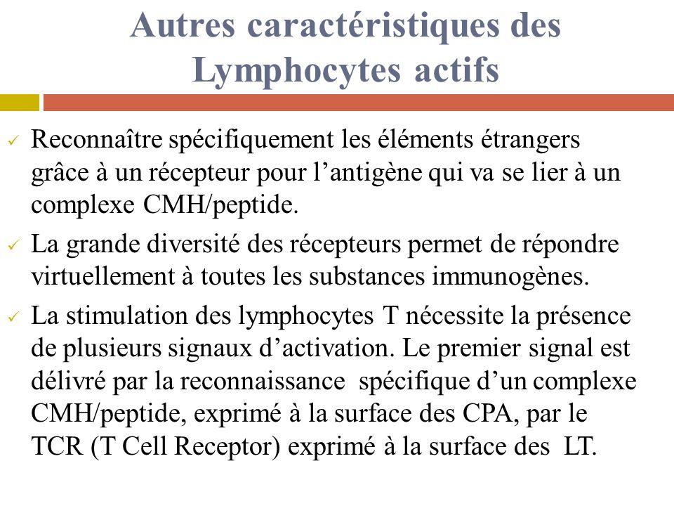 Autres caractéristiques des Lymphocytes actifs Reconnaître spécifiquement les éléments étrangers grâce à un récepteur pour lantigène qui va se lier à un complexe CMH/peptide.
