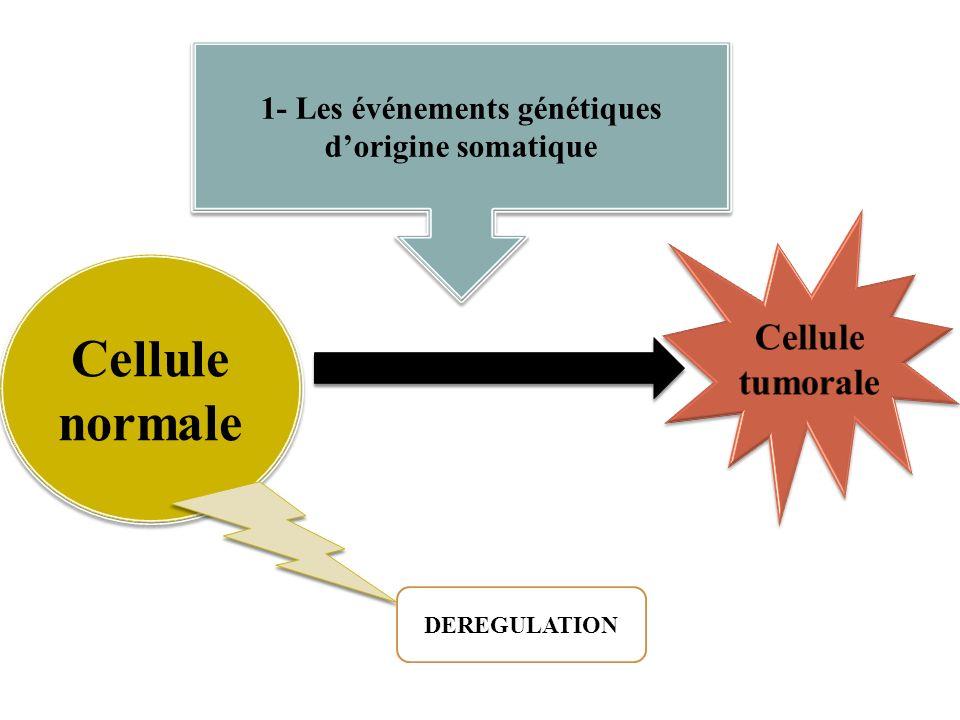 1- Les événements génétiques dorigine somatique Cellule normale DEREGULATION