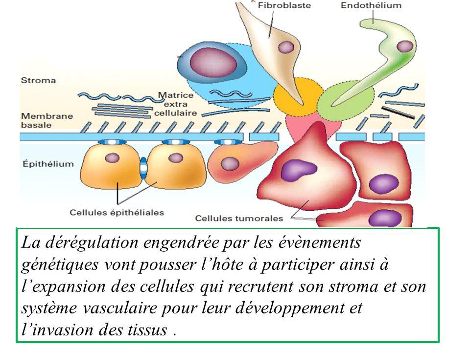 La dérégulation engendrée par les évènements génétiques vont pousser lhôte à participer ainsi à lexpansion des cellules qui recrutent son stroma et son système vasculaire pour leur développement et linvasion des tissus.
