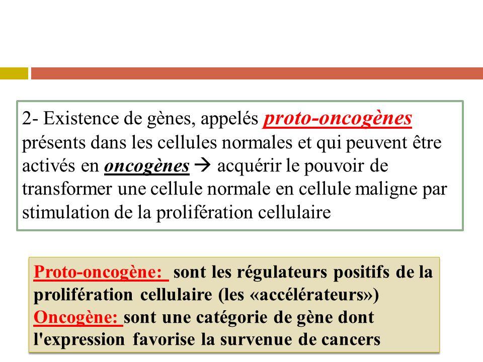2- Existence de gènes, appelés proto-oncogènes présents dans les cellules normales et qui peuvent être activés en oncogènes acquérir le pouvoir de transformer une cellule normale en cellule maligne par stimulation de la prolifération cellulaire Proto-oncogène: sont les régulateurs positifs de la prolifération cellulaire (les «accélérateurs») Oncogène: sont une catégorie de gène dont l expression favorise la survenue de cancers Proto-oncogène: sont les régulateurs positifs de la prolifération cellulaire (les «accélérateurs») Oncogène: sont une catégorie de gène dont l expression favorise la survenue de cancers