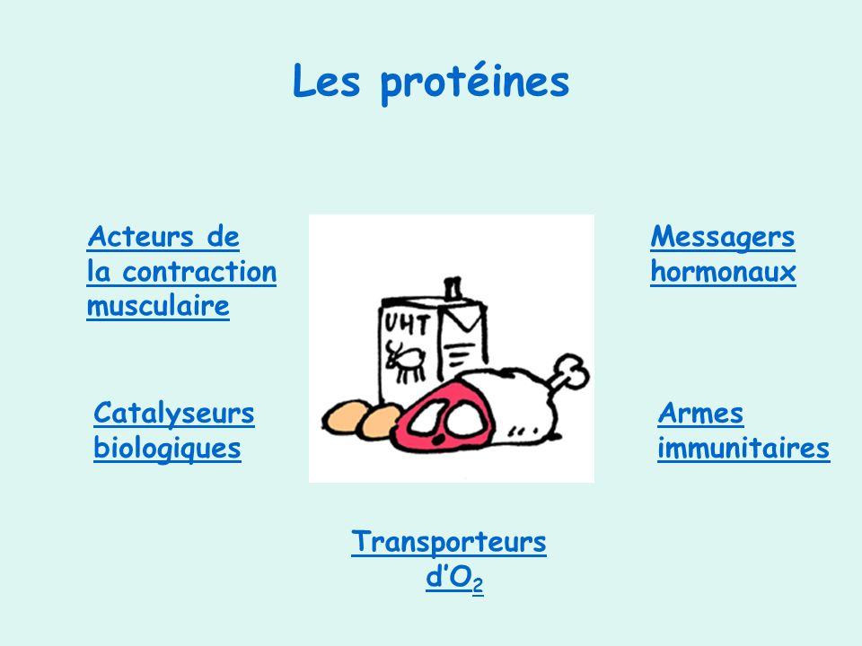 Les protéines Acteurs de la contraction musculaire Catalyseurs biologiques Armes immunitaires Messagers hormonaux Transporteurs dO 2dO 2