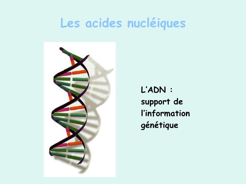 LADN : support de linformation génétique