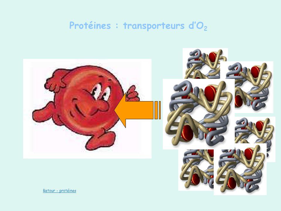 Protéines : transporteurs dO 2 Retour - protéines