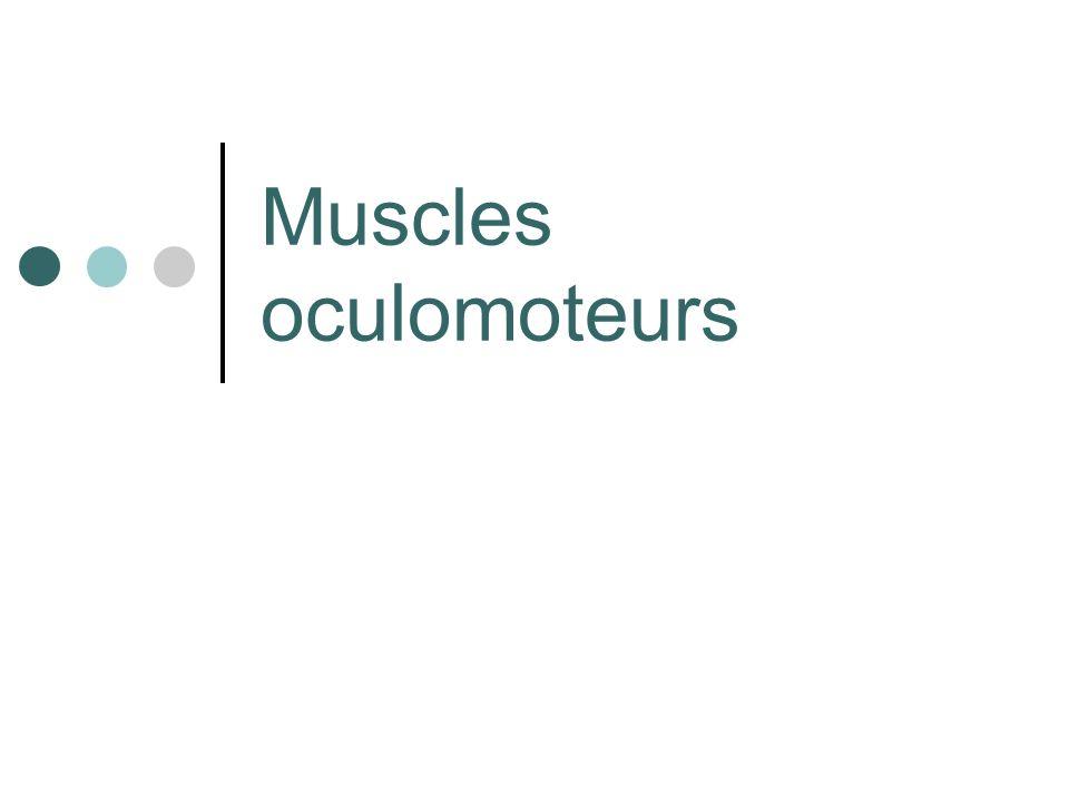 Correspondent à la musculature extrinsèque de lœil.