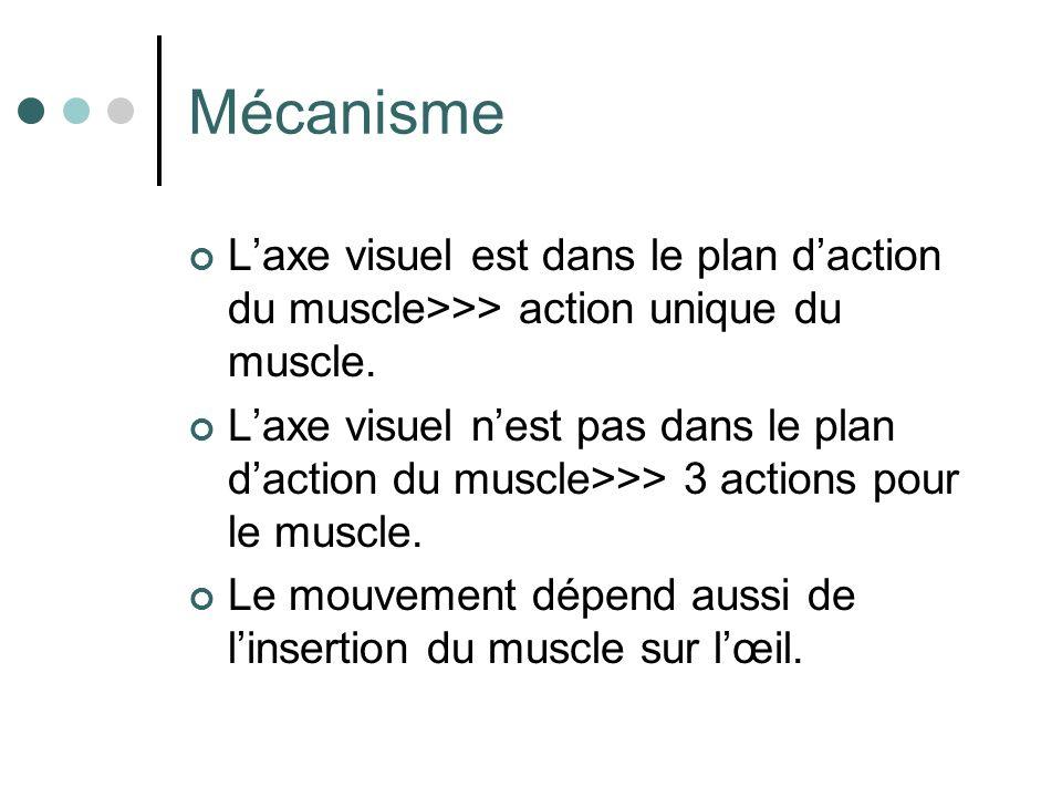 Mécanisme Laxe visuel est dans le plan daction du muscle>>> action unique du muscle. Laxe visuel nest pas dans le plan daction du muscle>>> 3 actions