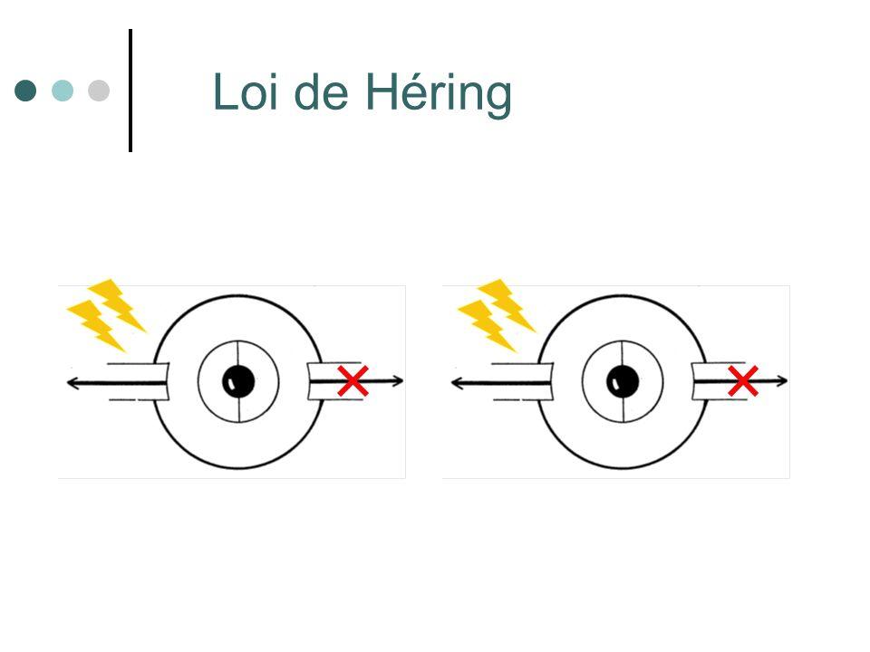 Définitions Centre de rotation: centre de lœil Ligne daction du muscle: ligne qui unit lorigine orbitaire et linsertion oculaire.