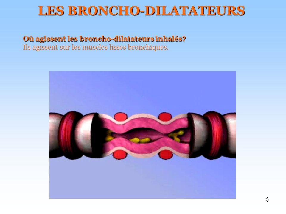 3 LES BRONCHO-DILATATEURS Où agissent les broncho-dilatateurs inhalés? Ils agissent sur les muscles lisses bronchiques.