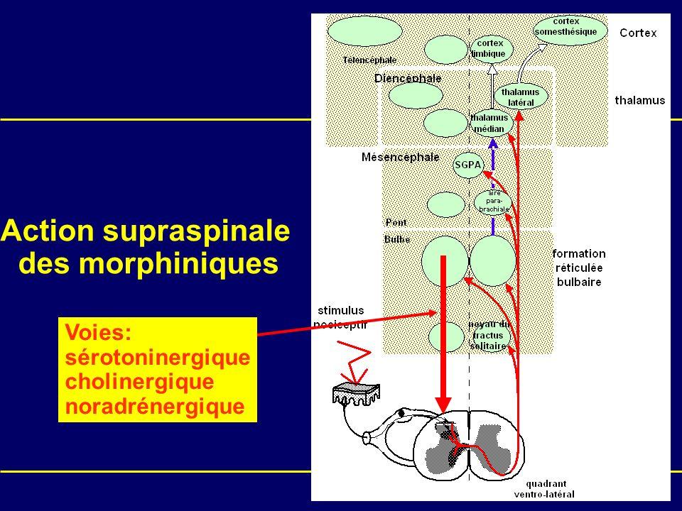 Action supraspinale des morphiniques Voies: sérotoninergique cholinergique noradrénergique