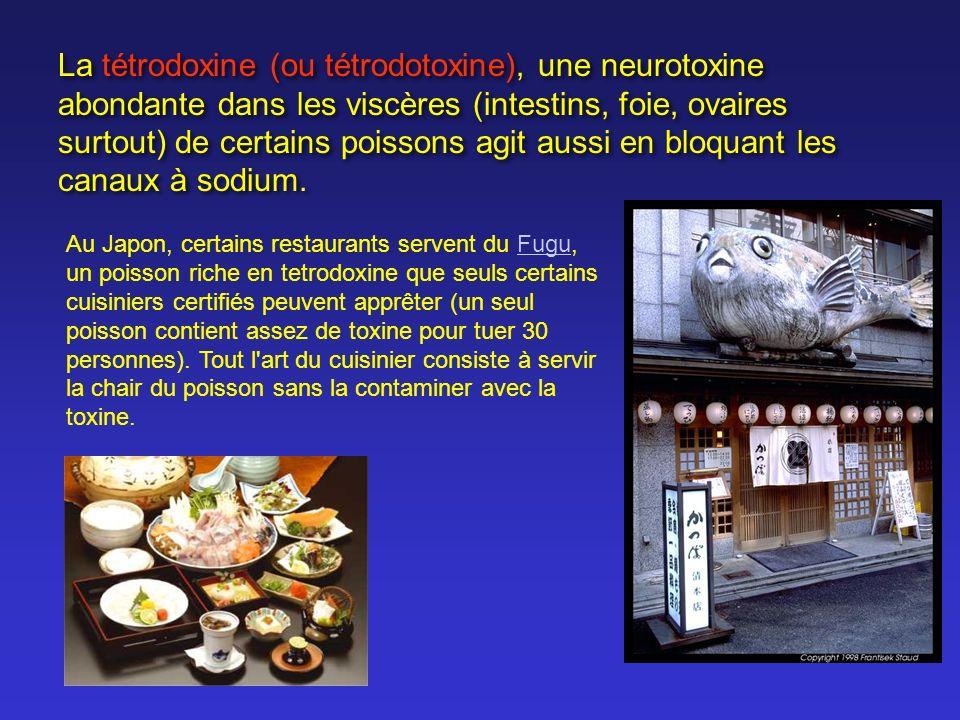 La tétrodoxine (ou tétrodotoxine), une neurotoxine abondante dans les viscères (intestins, foie, ovaires surtout) de certains poissons agit aussi en b