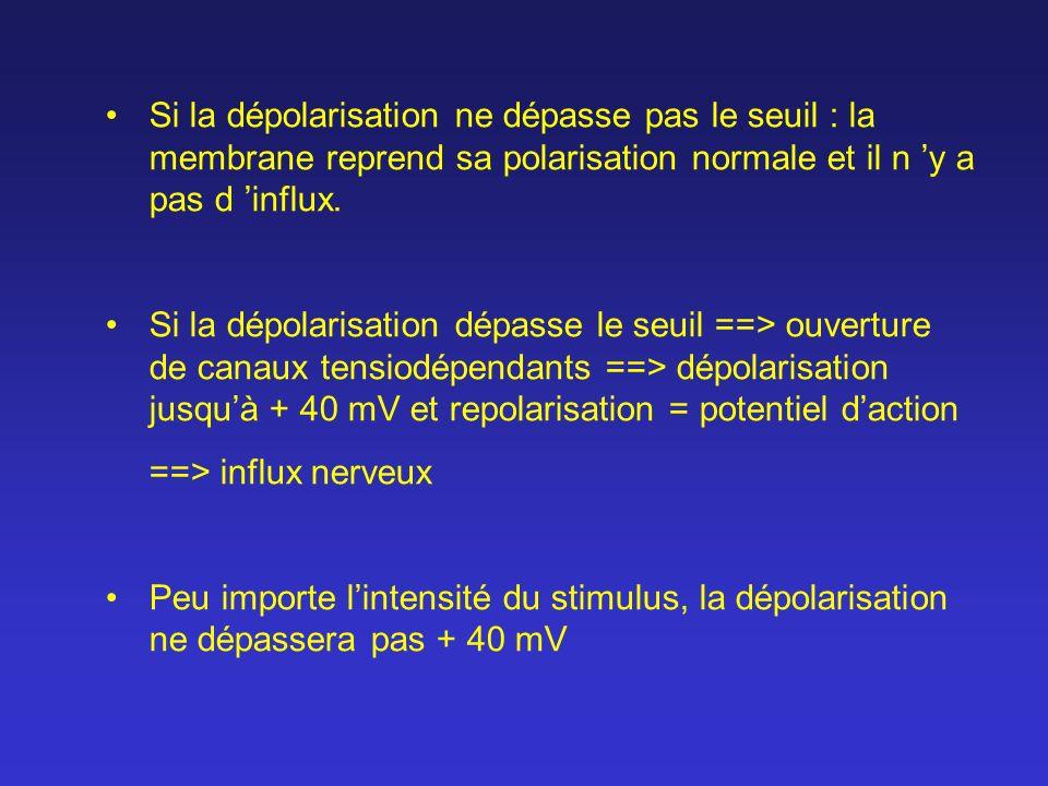 Si la dépolarisation ne dépasse pas le seuil : la membrane reprend sa polarisation normale et il n y a pas d influx. Si la dépolarisation dépasse le s