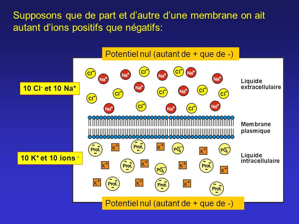 Si la dépolarisation ne dépasse pas le seuil : la membrane reprend sa polarisation normale et il n y a pas d influx.