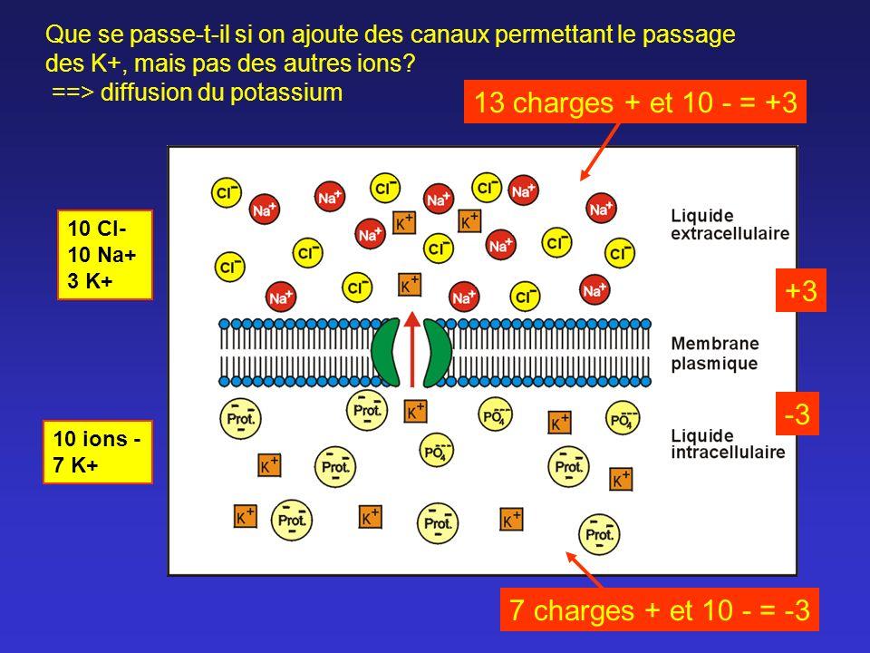 Que se passe-t-il si on ajoute des canaux permettant le passage des K+, mais pas des autres ions? ==> diffusion du potassium 10 Cl- 10 Na+ 3 K+ 10 ion