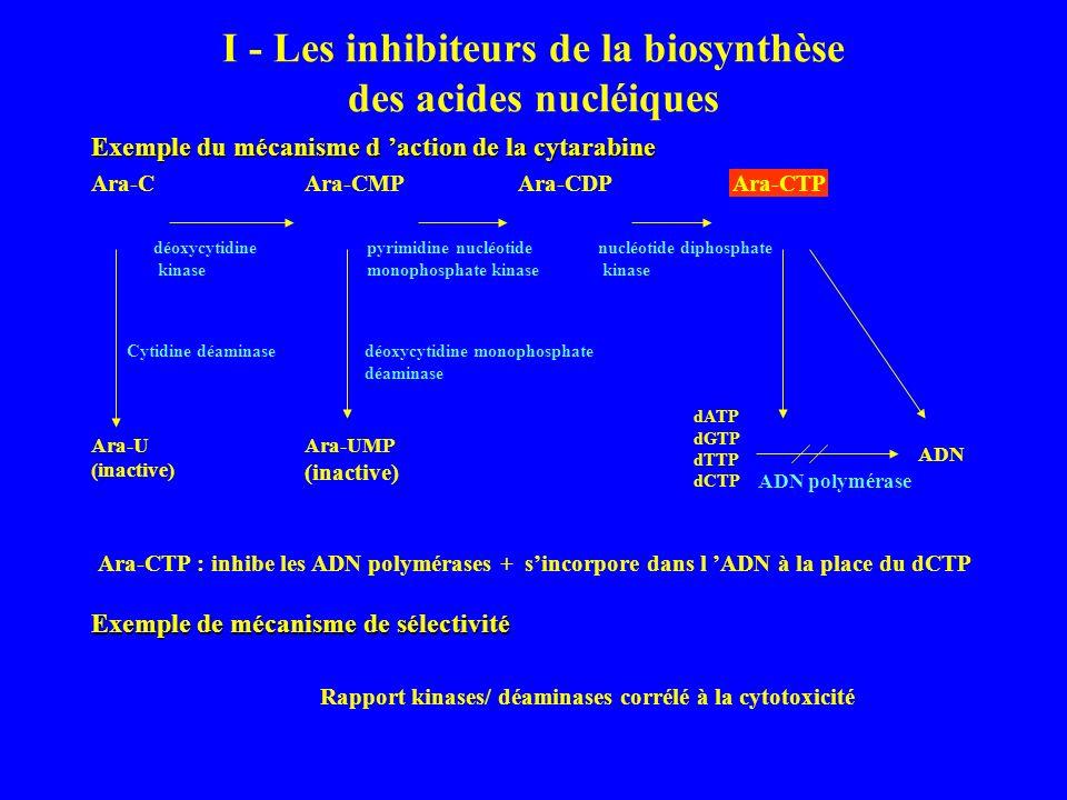 I - Les inhibiteurs de la biosynthèse des acides nucléiques Exemple du mécanisme d action de la cytarabine Ara-CAra-CMPAra-CDPAra-CTP déoxycytidine kinase pyrimidine nucléotide monophosphate kinase nucléotide diphosphate kinase Ara-U (inactive) Ara-UMP (inactive) dATP dGTP dTTP dCTP ADN ADN polymérase Cytidine déaminasedéoxycytidine monophosphate déaminase Ara-CTP : inhibe les ADN polymérases + sincorpore dans l ADN à la place du dCTP Exemple de mécanisme de sélectivité Rapport kinases/ déaminases corrélé à la cytotoxicité Ara-CTP