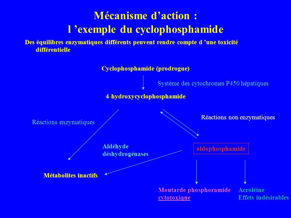 Mécanisme daction : l exemple du cyclophosphamide Des équilibres enzymatiques différents peuvent rendre compte d une toxicité différentielle Cyclophosphamide (prodrogue) 4-hydroxycyclophosphamide Système des cytochromes P450 hépatiques Réactions enzymatiques Métabolites inactifs aldophosphamide Réactions non enzymatiques Moutarde phosphoramide cytotoxique Acroléine Effets indésirables Aldéhyde déshydrogénases