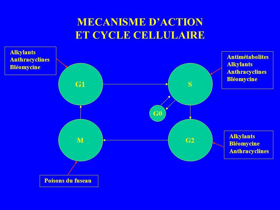 MECANISME DACTION ET CYCLE CELLULAIRE G1 S MG2 G0 Antimétabolites Alkylants Anthracyclines Bléomycine Alkylants Bléomycine Anthracyclines Poisons du fuseau Alkylants Anthracyclines Bléomycine