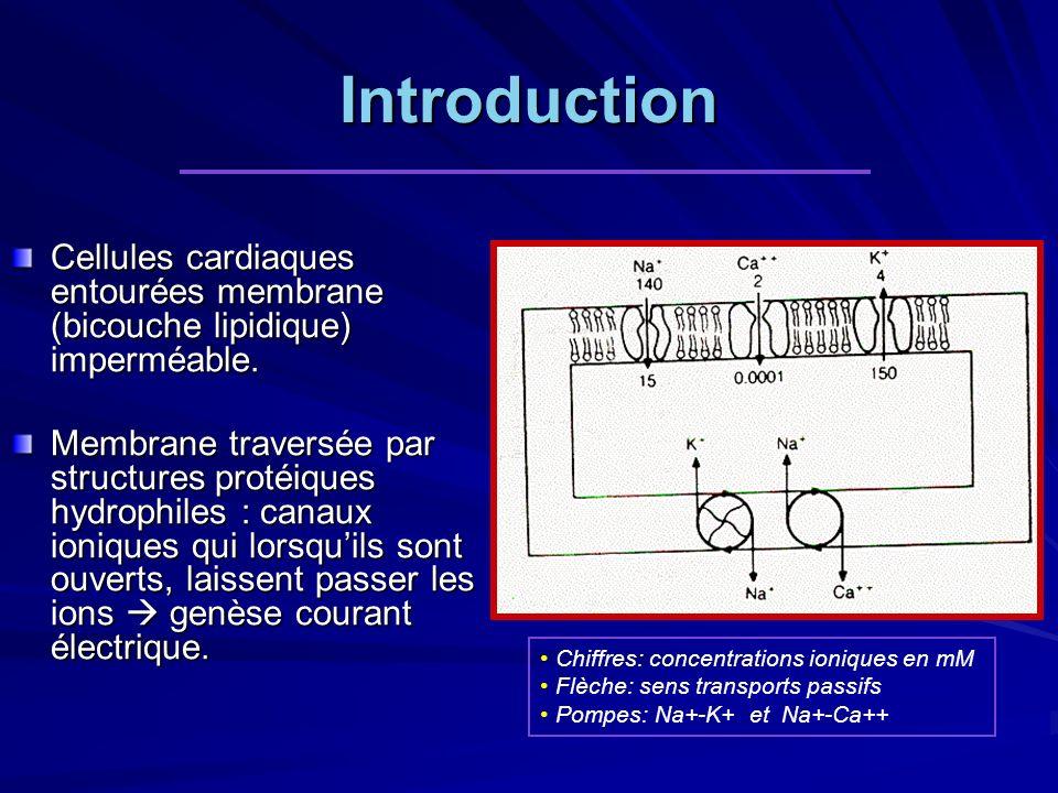 Introduction Cellules cardiaques entourées membrane (bicouche lipidique) imperméable. Membrane traversée par structures protéiques hydrophiles : canau