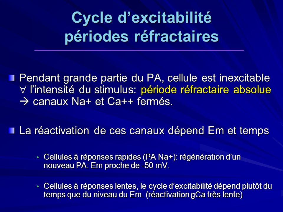 Cycle dexcitabilité périodes réfractaires Pendant grande partie du PA, cellule est inexcitable lintensité du stimulus: période réfractaire absolue canaux Na+ et Ca++ fermés.