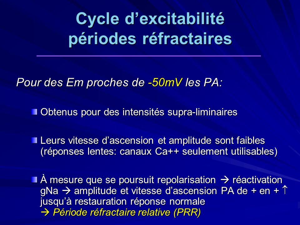 Pour des Em proches de -50mV les PA: Obtenus pour des intensités supra-liminaires Leurs vitesse dascension et amplitude sont faibles (réponses lentes: canaux Ca++ seulement utilisables) À mesure que se poursuit repolarisation réactivation gNa amplitude et vitesse dascension PA de + en + jusquà restauration réponse normale Période réfractaire relative (PRR) Cycle dexcitabilité périodes réfractaires