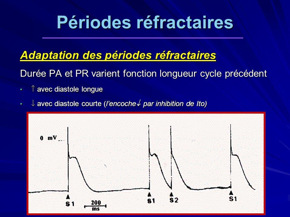 Adaptation des périodes réfractaires Durée PA et PR varient fonction longueur cycle précédent avec diastole longue avec diastole longue avec diastole