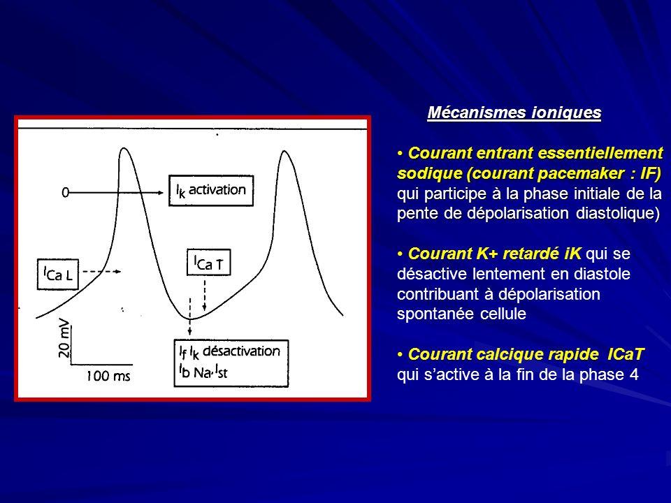 Mécanismes ioniques Courant entrant essentiellement Courant entrant essentiellement sodique (courant pacemaker : IF) qui participe à la phase initiale de la pente de dépolarisation diastolique) Courant K+ retardé iK qui se désactive lentement en diastole contribuant à dépolarisation spontanée cellule Courant calcique rapide ICaT qui sactive à la fin de la phase 4