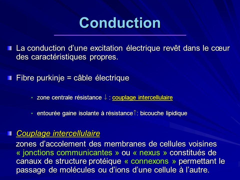 Conduction La conduction dune excitation électrique revêt dans le cœur des caractéristiques propres. Fibre purkinje = câble électrique zone centrale r