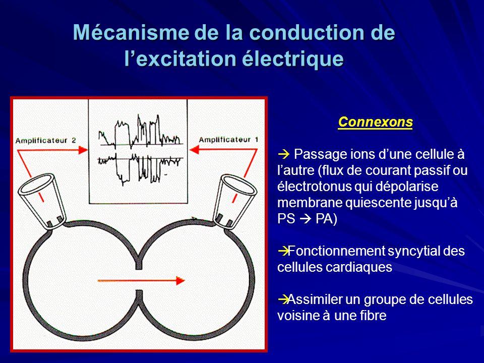 Connexons Passage ions dune cellule à lautre (flux de courant passif ou électrotonus qui dépolarise membrane quiescente jusquà PS PA) Fonctionnement syncytial des cellules cardiaques Assimiler un groupe de cellules voisine à une fibre Mécanisme de la conduction de lexcitation électrique