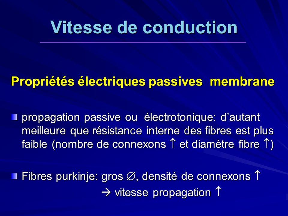 Vitesse de conduction Propriétés électriques passives membrane propagation passive ou électrotonique: dautant meilleure que résistance interne des fib