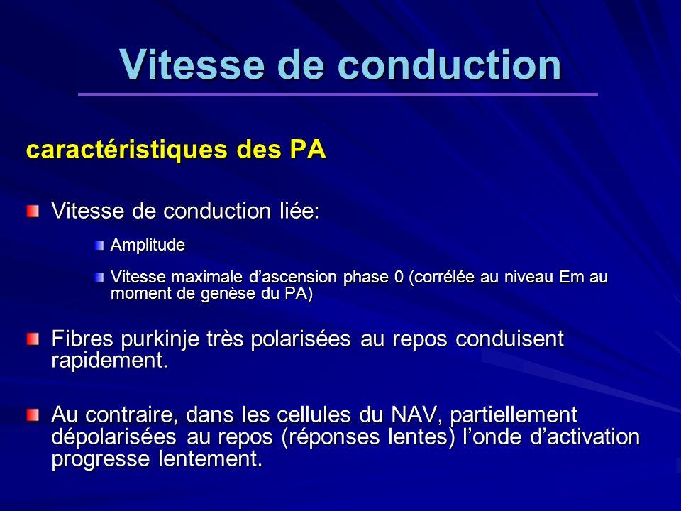 caractéristiques des PA Vitesse de conduction liée: Amplitude Vitesse maximale dascension phase 0 (corrélée au niveau Em au moment de genèse du PA) Fibres purkinje très polarisées au repos conduisent rapidement.