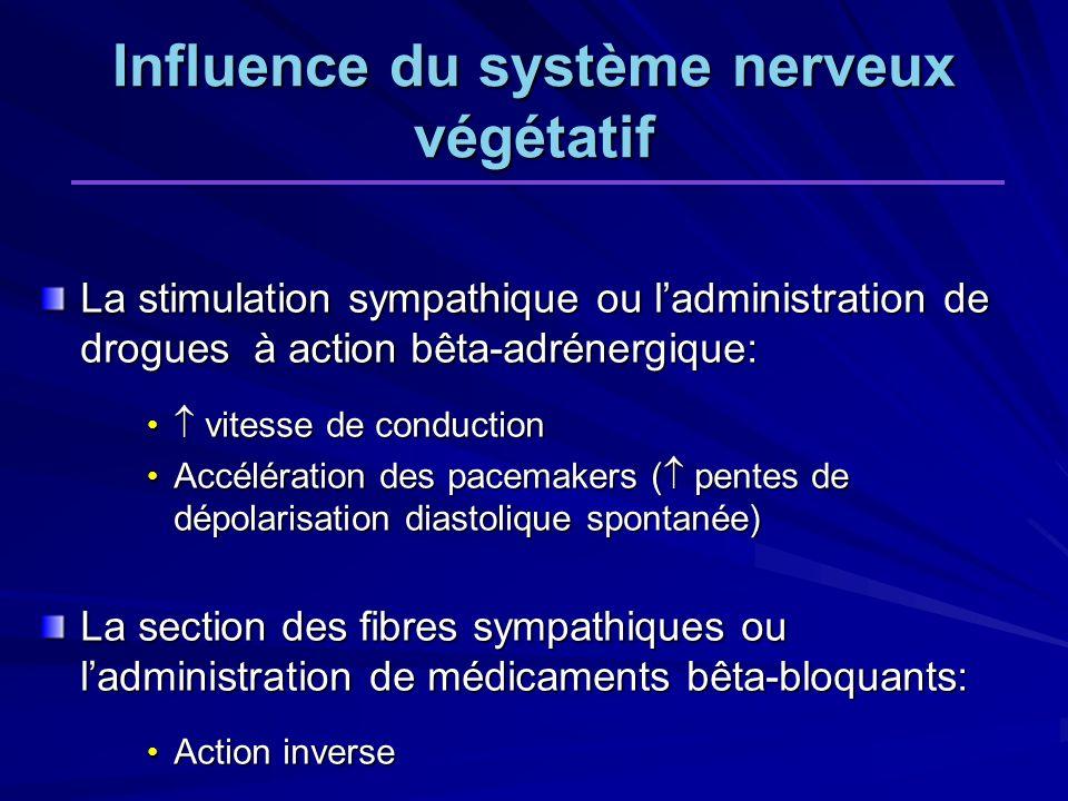 Influence du système nerveux végétatif La stimulation sympathique ou ladministration de drogues à action bêta-adrénergique: vitesse de conduction vite