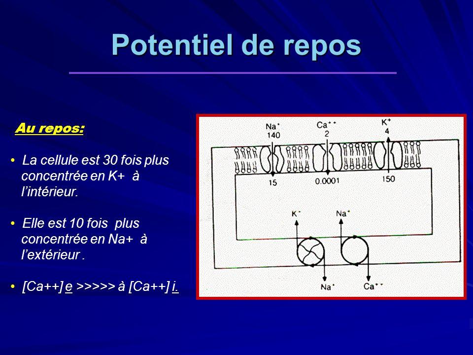 Potentiel de repos Au repos: La cellule est 30 fois plus concentrée en K+ à lintérieur. Elle est 10 fois plus concentrée en Na+ à lextérieur. [Ca++] e