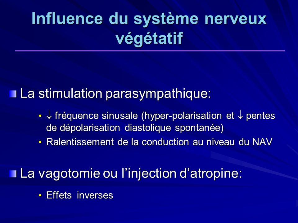 La stimulation parasympathique: fréquence sinusale (hyper-polarisation et pentes de dépolarisation diastolique spontanée) fréquence sinusale (hyper-polarisation et pentes de dépolarisation diastolique spontanée) Ralentissement de la conduction au niveau du NAV Ralentissement de la conduction au niveau du NAV La vagotomie ou linjection datropine: Effets inverses Effets inverses Influence du système nerveux végétatif