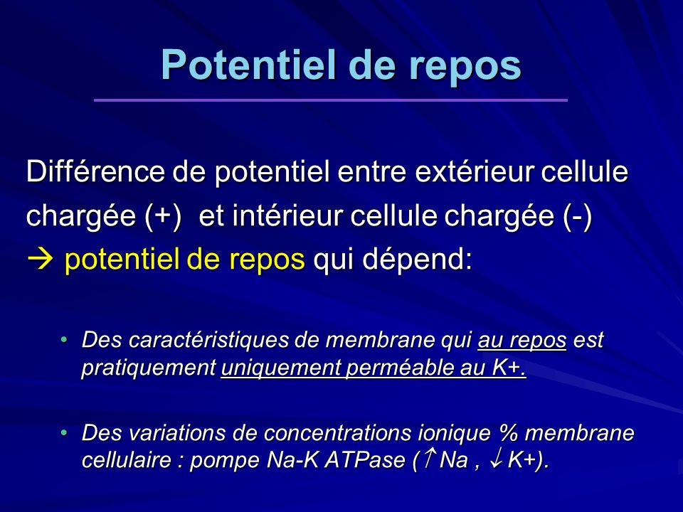 Potentiel de repos Différence de potentiel entre extérieur cellule chargée (+) et intérieur cellule chargée (-) potentiel de repos qui dépend: potentiel de repos qui dépend: Des caractéristiques de membrane qui au repos est pratiquement uniquement perméable au K+.Des caractéristiques de membrane qui au repos est pratiquement uniquement perméable au K+.