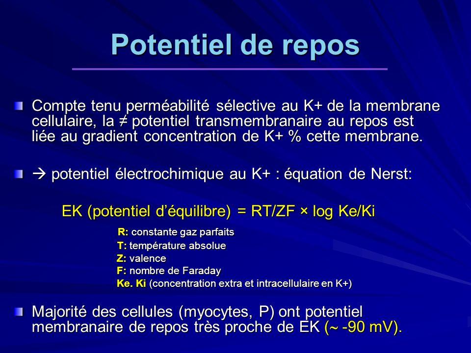Potentiel de repos Compte tenu perméabilité sélective au K+ de la membrane cellulaire, la potentiel transmembranaire au repos est liée au gradient concentration de K+ % cette membrane.