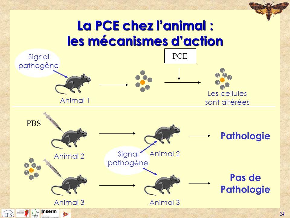 24 La PCE chez lanimal : les mécanismes daction Signal pathogène Animal 1 PCE Les cellules sont altérées Animal 3 Animal 2 PBS Pas de Pathologie Signa