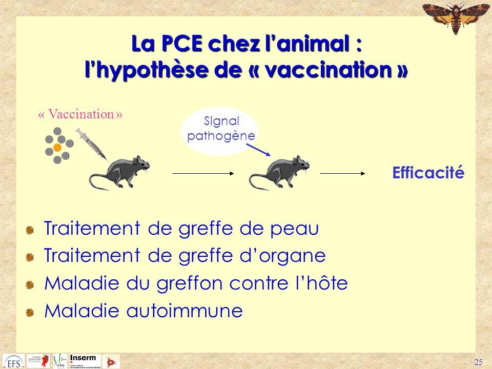 25 La PCE chez lanimal : lhypothèse de « vaccination » Traitement de greffe de peau Traitement de greffe dorgane Maladie du greffon contre lhôte Malad