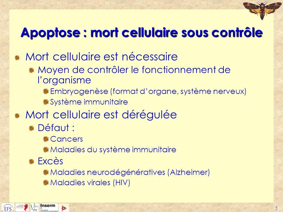 5 Apoptose : mort cellulaire sous contrôle Mort cellulaire est nécessaire Moyen de contrôler le fonctionnement de lorganisme Embryogenèse (format dorg